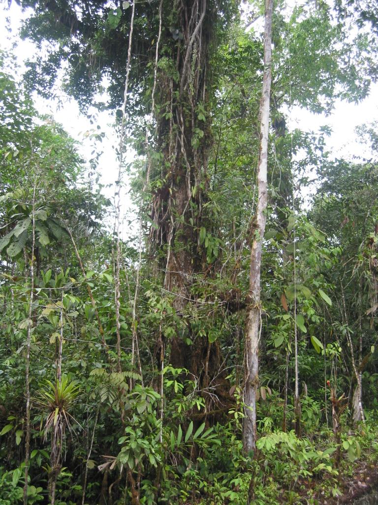 Figura 2. Pila Maria: Estructura del bosque